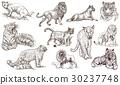 艺术的 艺术作品 猫 30237748