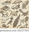 Animals around the World - An hand drawn pack. 30237763
