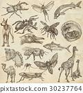 动物 艺术的 艺术作品 30237764