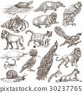Animals around the World - An hand drawn pack. 30237765