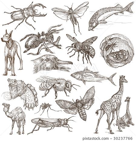 Animals around the World - An hand drawn pack. 30237766