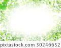 신록 잎 봄 배경 30246652