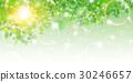翠綠 鮮綠 葉 30246657