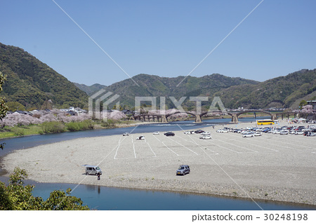 櫻花和Kintai-kyo橋 30248198