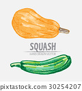 Digital vector detailed squash hand drawn 30254207