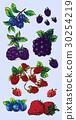 fruit, vector, fruits 30254219
