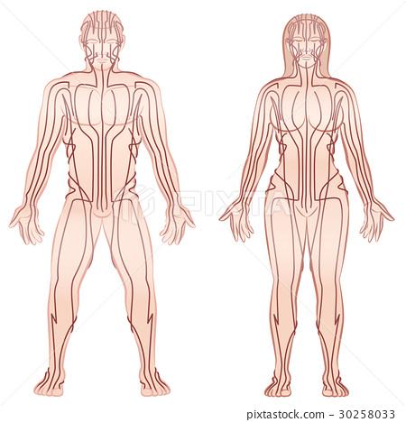 Body Meridians Man Woman Couple 30258033