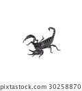 Scorpion isolated on white background 30258870