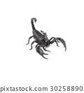 Scorpion isolated on white background 30258890