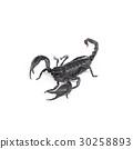 Scorpion isolated on white background 30258893