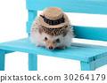 动物 可爱 刺猬 30264179