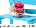 动物 刺猬 宠物 30264182
