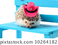 Hedghog with cowboy hat. 30264182