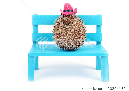 Hedgehog and cowboy hat. 30264183