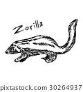 zorilla - vector illustration sketch hand drawn 30264937