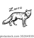 zorro standing - vector illustration sketch 30264939