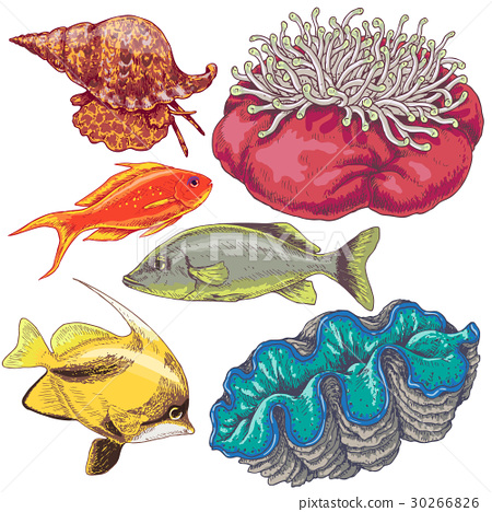 Reef Animals Set 30266826