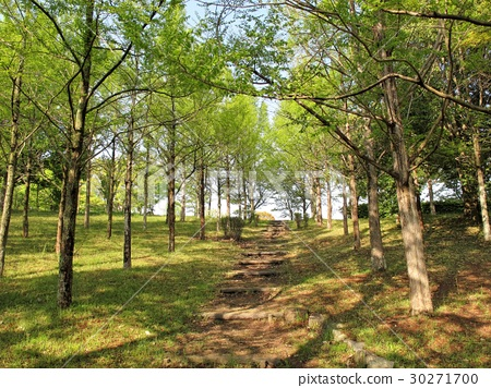 Nishinaka中央公園水杉Namiki新鮮的綠色 30271700
