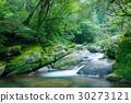 야쿠시마, 숲, 수풀 30273121