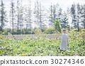 毛豆 綠大豆 收穫 30274346