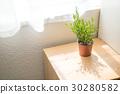 herb, herbal, herbs 30280582