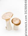 eringi mushroom 30280648