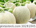哈蜜瓜 甜瓜 水果 30281045