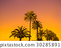 Palm trees against golden sunset 30285891