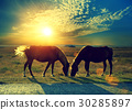 Couple of horses grazing in the meadow 30285897