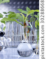 Plants in lab 30288668