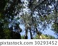 台灣 溪頭 森林 30293452