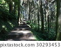 台灣 溪頭 森林步道 30293453