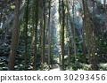 台灣 溪頭 森林 30293456