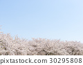 桜並木と青空 30295808