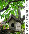 bird, box, garden 30304899