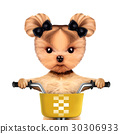Adorable doggy sitting on a bicycle with basket 30306933
