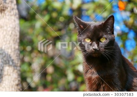 Stray cat 30307583