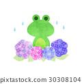 青蛙和繡球花 30308104