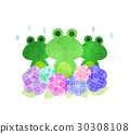 青蛙和繡球花 30308108