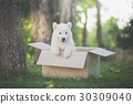 Cute siberian husky sitting in a box at the park 30309040
