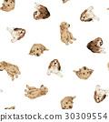 犬の背景 30309554