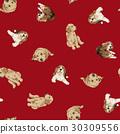 犬の背景 30309556