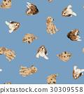 拉不拉多 拉布拉多狗 米格魯 30309558