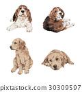 拉不拉多 拉布拉多狗 米格魯 30309597