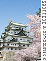 Cherry blossoms in full bloom and Nagoya castle 30311065