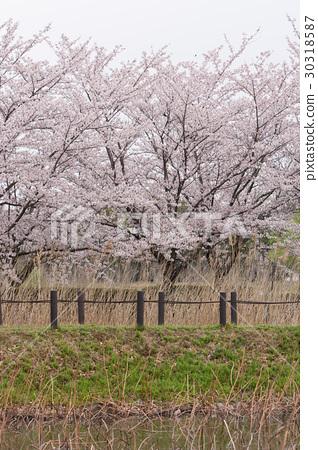 Spring scenery 30318587