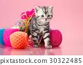 kitten 30322485