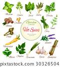 香料 香草 蔬菜 30326504