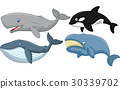 Cartoon whale collection 30339702