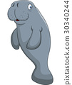 animal, character, manatee 30340244